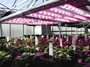 Рис. 6. Основные усилия американских и европейских производителей светодиодов направлены на выпуск продукции для сельского хозяйства